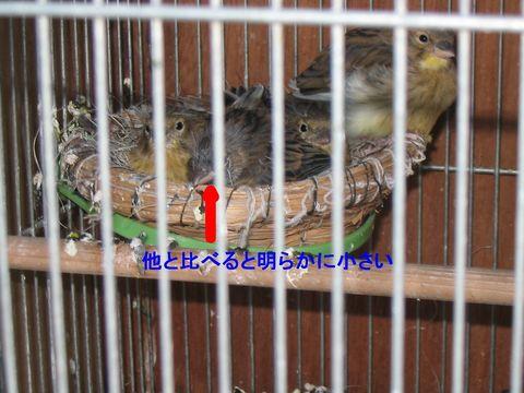 画像 004.jpg